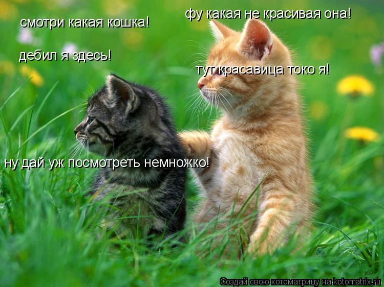 Котоматрица: смотри какая кошка! дебил я здесь! ну дай уж посмотреть немножко! фу какая не красивая она! тут красавица токо я!