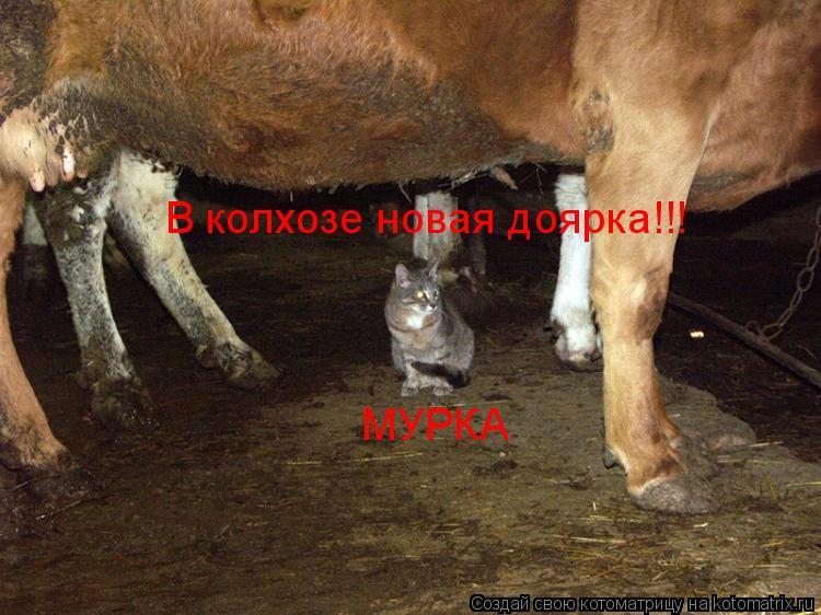 Котоматрица: В колхозе новая доярка!!! МУРКА