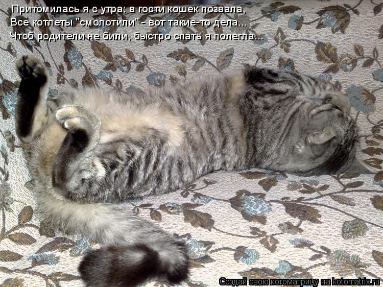 """Котоматрица: Притомилась я с утра: в гости кошек позвала, Все котлеты """"смолотили"""" - вот такие-то дела... Чтоб родители не били, быстро спать я полегла..."""