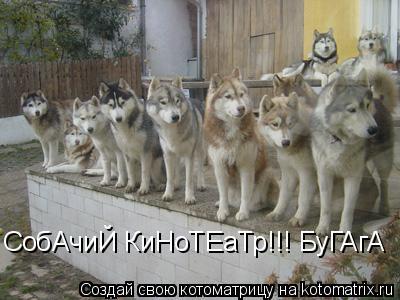 Котоматрица: СобАчиЙ КиНоТЕаТр!!! БуГАгА