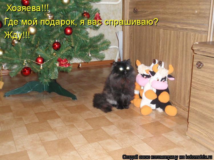 Котоматрица: Хозяева!!!  Где мой подарок, я вас спрашиваю? Жду!!!