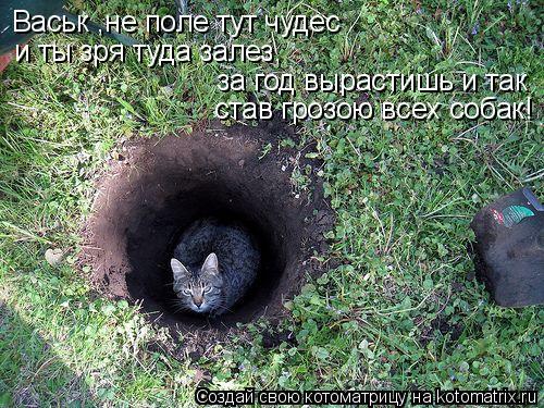 Котоматрица: Васьк ,не поле тут чудес за год вырастишь и так и ты зря туда залез, став грозою всех собак!