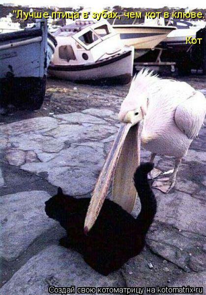 """Котоматрица: Кот """"Лучше птица в зубах, чем кот в клюве."""""""