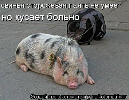 Котоматрица: свинья сторожевая,лаять не умеет,  но кусает больно