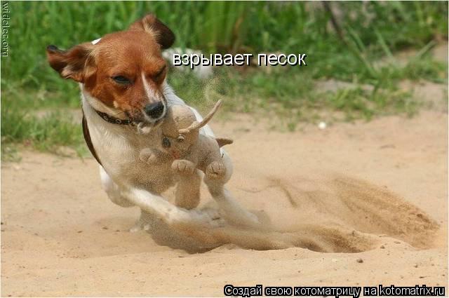 Котоматрица: взрывает песок