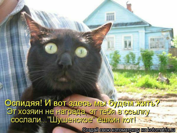 """Котоматрица: Оспидяя! И вот здесь мы будем жить? Эт хозяин не награда, эт тебя в ссылку сослали...""""Шушенское"""" ёшкин кот!"""