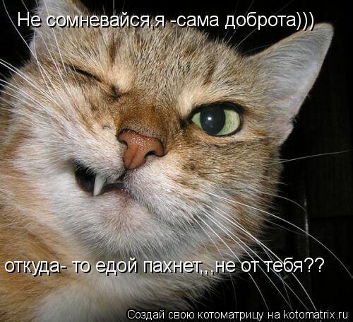 Котоматрица: Не сомневайся,я -сама доброта))) откуда- то едой пахнет,,,не от тебя??