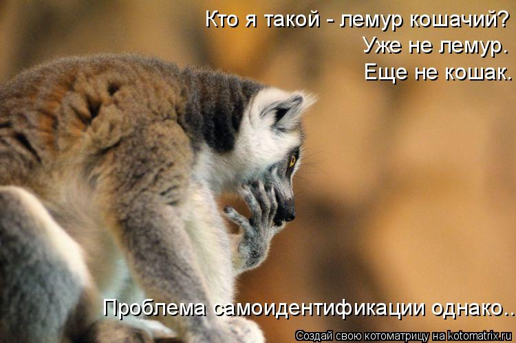 Котоматрица: Кто я такой - лемур кошачий? Уже не лемур. Еще не кошак. Проблема самоидентификации однако...