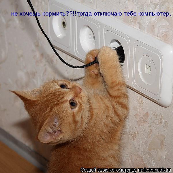 Котоматрица: не хочешь кормить??!!тогда отключаю тебе компьютер.