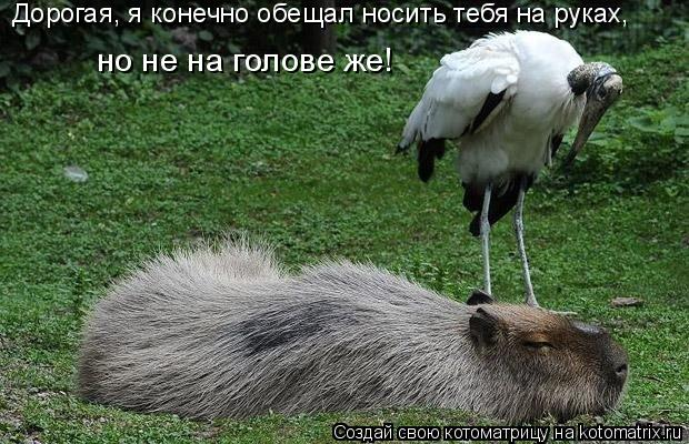 Котоматрица: Дорогая, я конечно обещал носить тебя на руках,  но не на голове же!