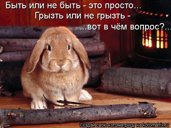 Котоматрица: Быть или не быть - это просто... Грызть или не грызть -  ...вот в чём вопрос?...