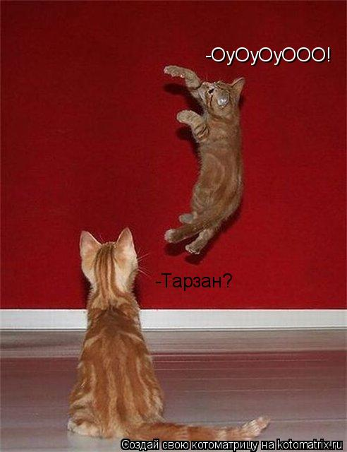 Котоматрица: -ОуОуОуООО! -Тарзан?