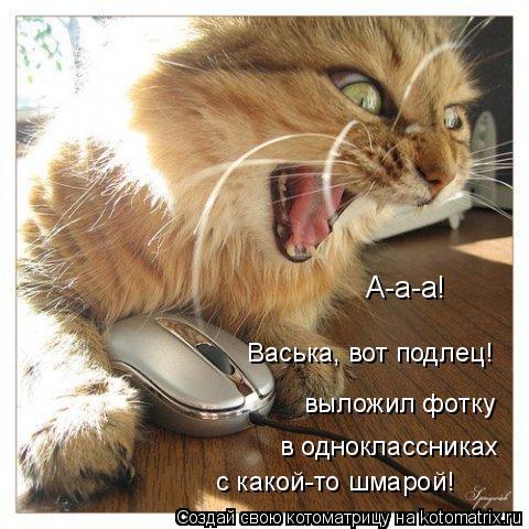 Котоматрица: А-а-а! Васька, вот подлец! выложил фотку в одноклассниках с какой-то шмарой!