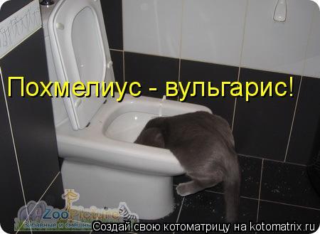Котоматрица: Похмелиус - вульгарис!