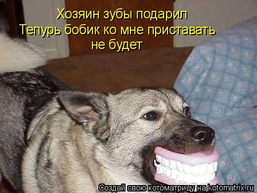 Котоматрица: Хозяин зубы подарил Тепурь бобик ко мне приставать  не будет