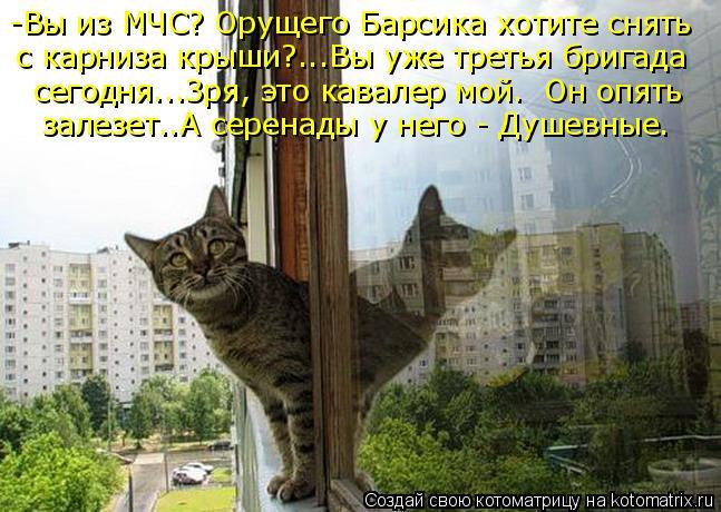 Котоматриця!)))) - Страница 4 Dz