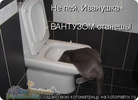 Котоматрица: Не пей, Иванушка ВАНТУЗОМ станешь!