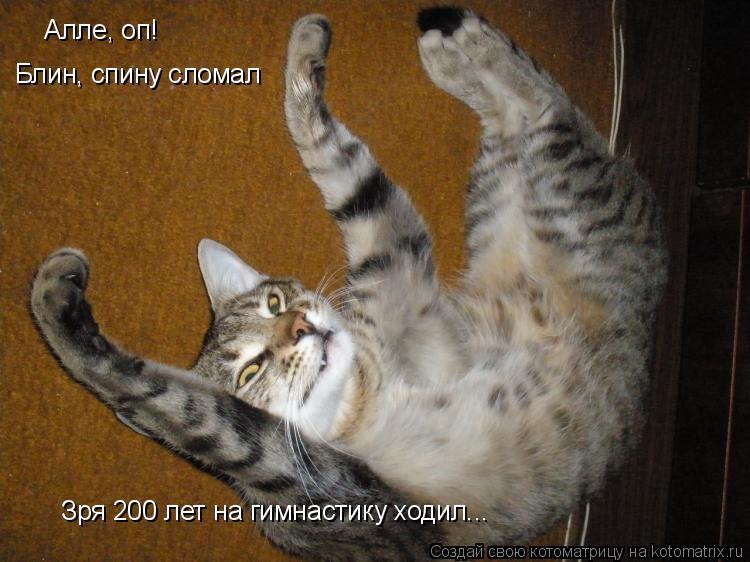 Котоматрица: Алле, оп! Блин, спину сломал Зря 200 лет на гимнастику ходил...