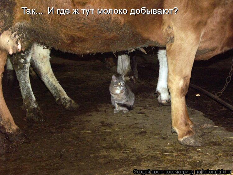 Котоматрица: Так... И где ж тут молоко добывают?