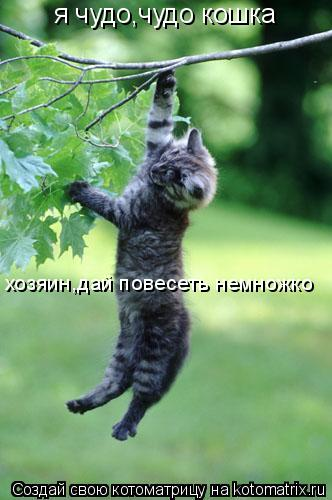 Котоматрица: я чудо,чудо кошка хозяин,дай повесеть немножко