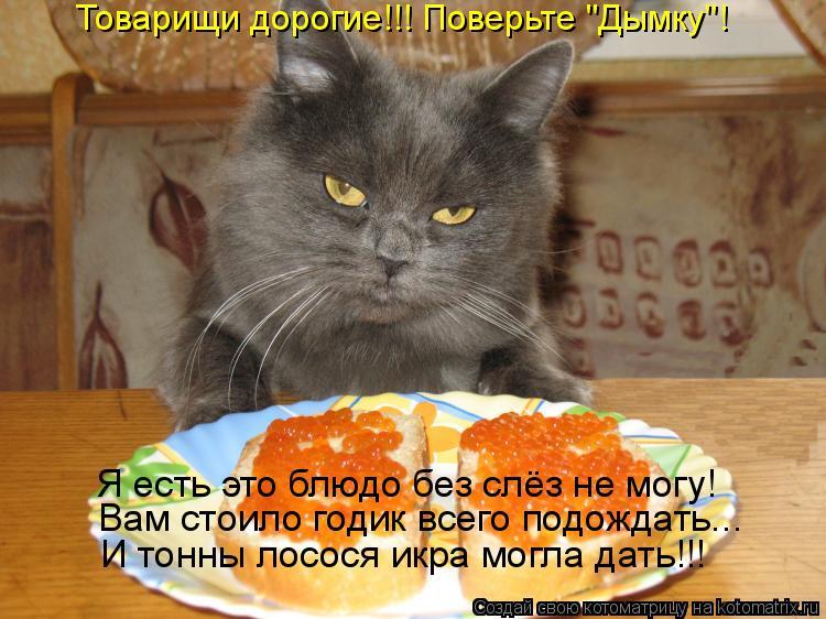 """Котоматрица: Товарищи дорогие!!! Поверьте """"Дымку""""! Я есть это блюдо без слёз не могу! Вам стоило годик всего подождать... И тонны лосося икра могла дать!!!"""