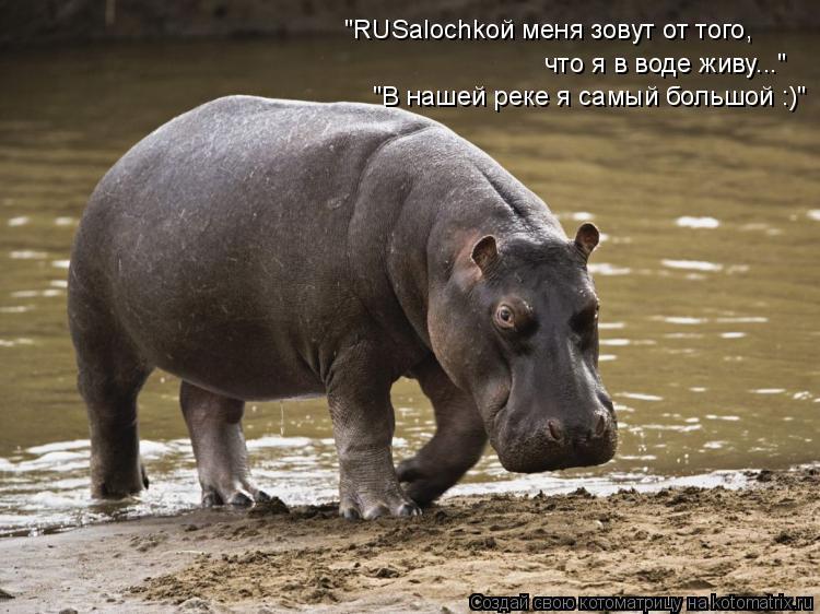 """Котоматрица: что я в воде живу..."""" """"RUSalochkой меня зовут от того, """"В нашей реке я самый большой :)"""""""