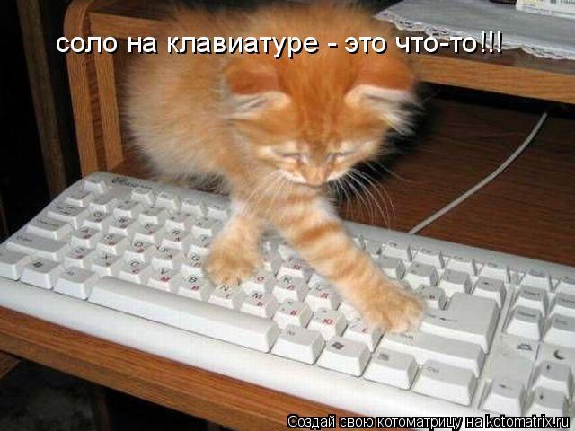 Котоматрица: соло на клавиатуре - это что-то!!!