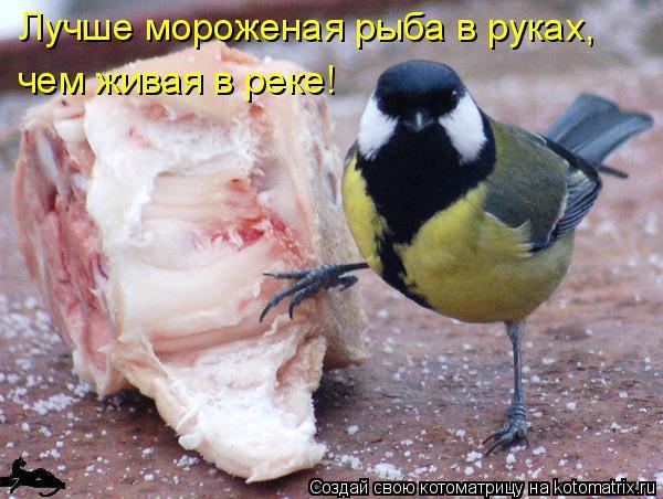 Котоматрица: Лучше мороженая рыба в руках,  чем живая в реке!