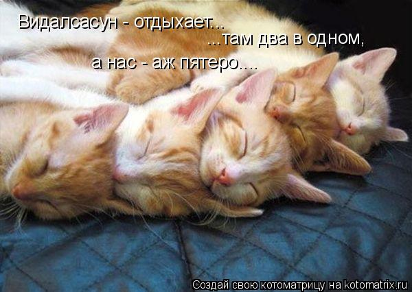 Котоматрица: Видалсасун - отдыхает... ...там два в одном, а нас - аж пятеро....