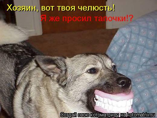 Котоматрица: Хозяин, вот твоя челюсть! Я же просил тапочки!?