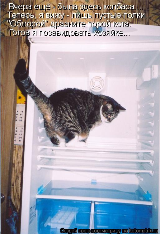 """Котоматрица: Вчера ещё - была здесь колбаса.... Теперь, я вижу - лишь пустые полки. """"Обжорой"""" дразните порой кота. Готов я позавидовать хозяйке..."""