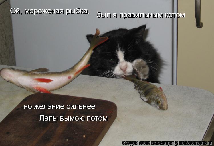 Котоматрица: Ой, мороженая рыбка, Ой, мороженая рыбка, был я правильным котом но желание сильнее Лапы вымою потом