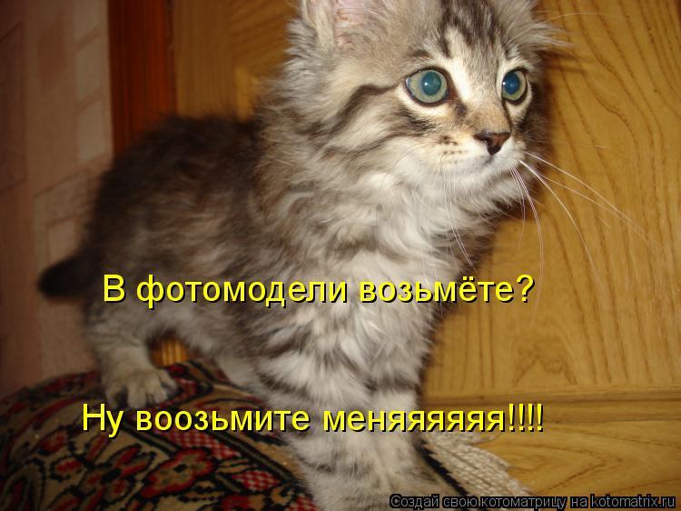 Котоматрица: В фотомодели возьмёте? Ну воозьмите меняяяяяя!!!!