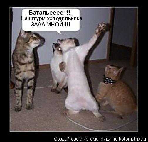 Котоматрица: Батальеееен!!! На штурм холодильника ЗААА МНОЙ!!!!