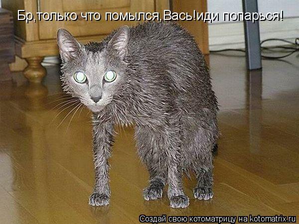 Котоматрица: Бр,только что помылся,Вась!иди попарься!