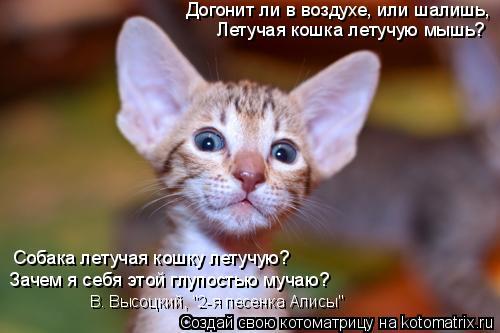 """Котоматрица: Догонит ли в воздухе, или шалишь, Летучая кошка летучую мышь? Собака летучая кошку летучую? Зачем я себя этой глупостью мучаю? В. Высоцкий, """"2-"""