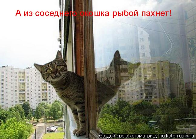 Котоматрица: А из соседнего окошка рыбой пахнет!