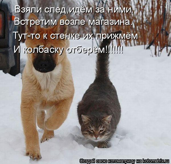 Котоматрица: Взяли след,идём за ними. Встретим возле магазина. Тут-то к стенке их прижмём И колбаску отберём!!!!!!!