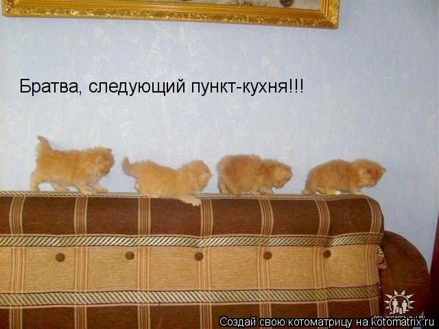 Котоматрица: Братва, следующий пункт-кухня!!!