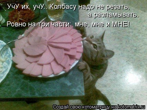 Котоматрица: УчУ их, учУ.. Колбасу надо не резать, мне, мне и МНЕ! а разламывать. Ровно на три части: