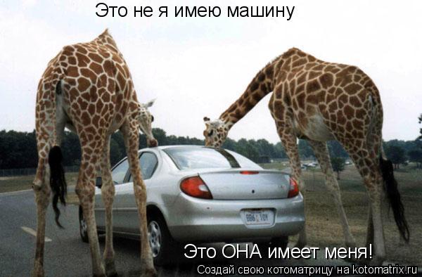 Котоматрица: Это не я имею машину Это ОНА имеет меня!