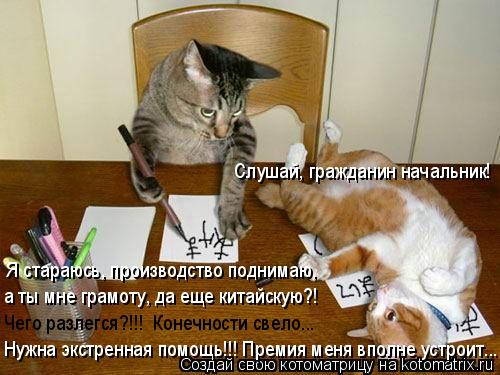Котоматрица: Я стараюсь, производство поднимаю, а ты мне грамоту, да еще китайскую?! Слушай, гражданин начальник! Нужна экстренная помощь!!! Премия меня вп