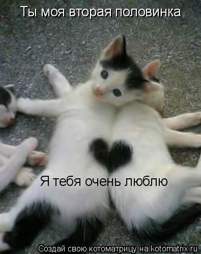 Котоматрица: Ты моя вторая половинка Я тебя очень люблю