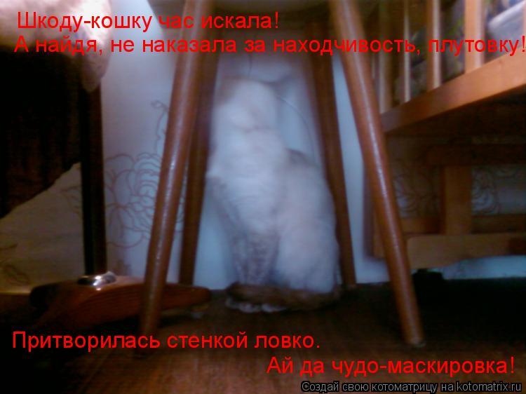 Котоматрица: Шкоду-кошку час искала!  А найдя, не наказала за находчивость, плутовку! Притворилась стенкой ловко. Ай да чудо-маскировка!