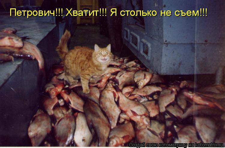 Котоматрица: Петрович!!! Хватит!!! Я столько не съем!!!