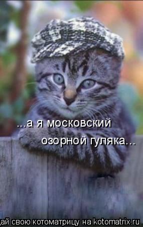 Котоматрица: ...а я московский озорной гуляка...