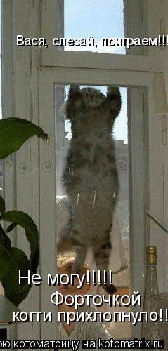 Котоматрица: Вася, слезай, поиграем!!! Не могу!!!!! Форточкой  когти прихлопнуло!!!!!