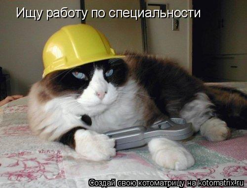 Котоматрица: Ищу работу по специальности