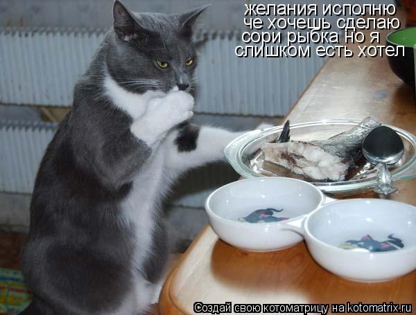 Котоматрица: желания исполню че хочешь сделаю сори рыбка но я  слишком есть хотел