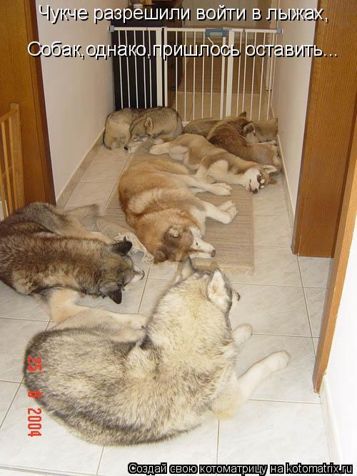 Котоматрица: Чукче разрешили войти в лыжах, Собак,однако,пришлось оставить...